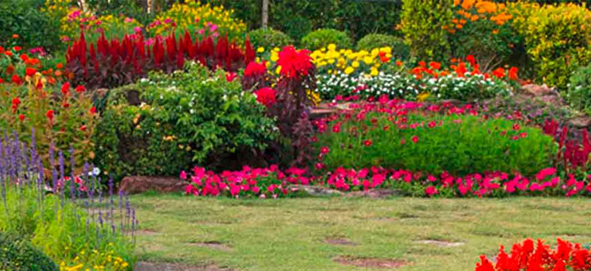 bunt blühende Blumenwiese in einem Garten mit Rasen