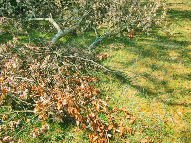 gefällte Baumreste mit Laub im Gras liegend